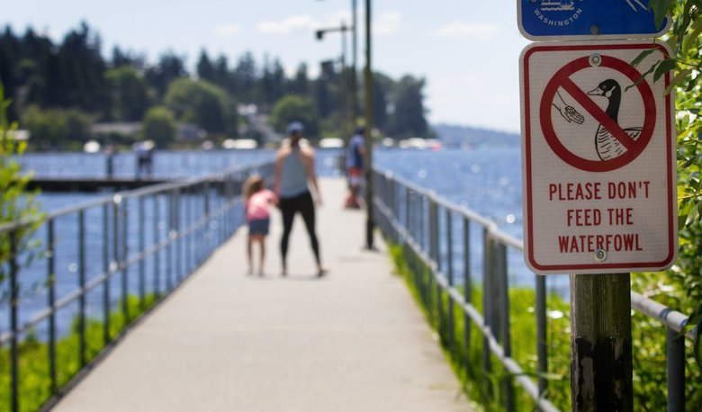A sign on a pier at Juanita Beach Park in Kirkland requests that visitors don't feed the waterfowl. The beach is occasionally closed to swimmers due to unsafe conditions because of duck poop. (Ellen M. Banner / The Seattle Times)