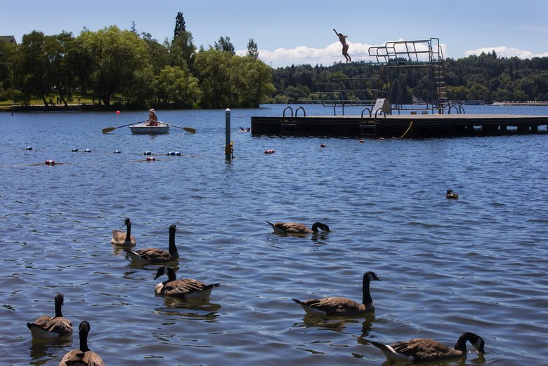 A swimmer jumps into Green Lake Tuesday in Seattle. (Ellen M. Banner / The Seattle Times)
