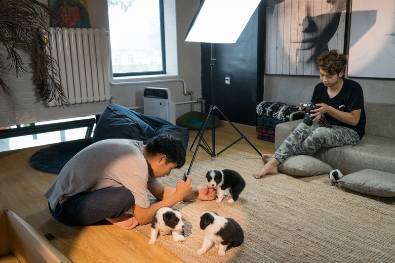 Staff members take photos of newborn puppies in a small studio at the doghouse in Beijing's suburbs. Sylar's populatirty led his owner, Zhou Tianxiao, to open an online dog food and toy store. (Photo for The Washington Post by Yan Cong).