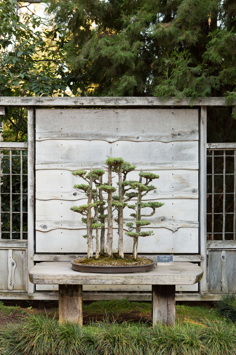 A foemina juniper bonsai on display in the Japanese Garden at The Huntington, a library, art museum and botanical garden in San Marino, Calif., on July 12, 2018. The Huntington is one of several places in and around Los Angeles that can serve as a sanctuary from the city. (Beth Coller/The New York Times)