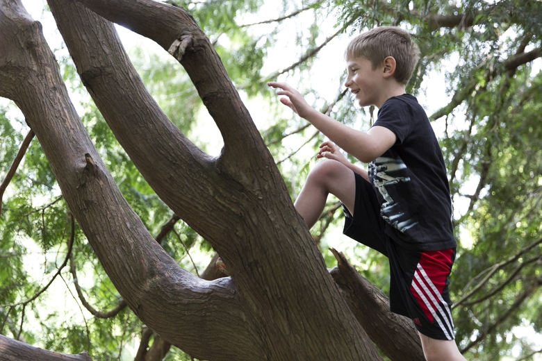 Carson Danielle, 8, walks up a tree without using his hands during Rafe Kelley's weekly outdoor movement class at Volunteer Park in Seattle. (Jason Redmond/Special to The Seattle Times)