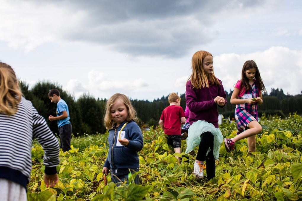 Kids step over rows of vegetables in search of green beans at Tonnemaker Farm on Sunday. (Rebekah Welch / The Seattle Times)