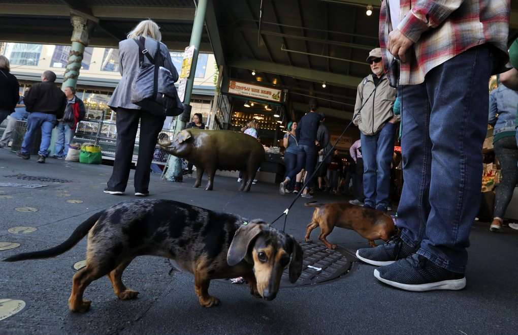 Maggie and Gracie pay no mind to Rachel the Pig behind them as they visit the Pike Place Market. (Alan Berner / The Seattle Times)