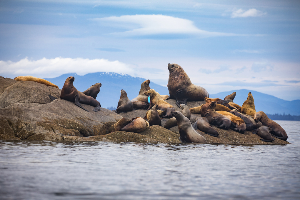 The 2017 group spotted a sea lion rookery near Deer Island. (Nate Dappen)