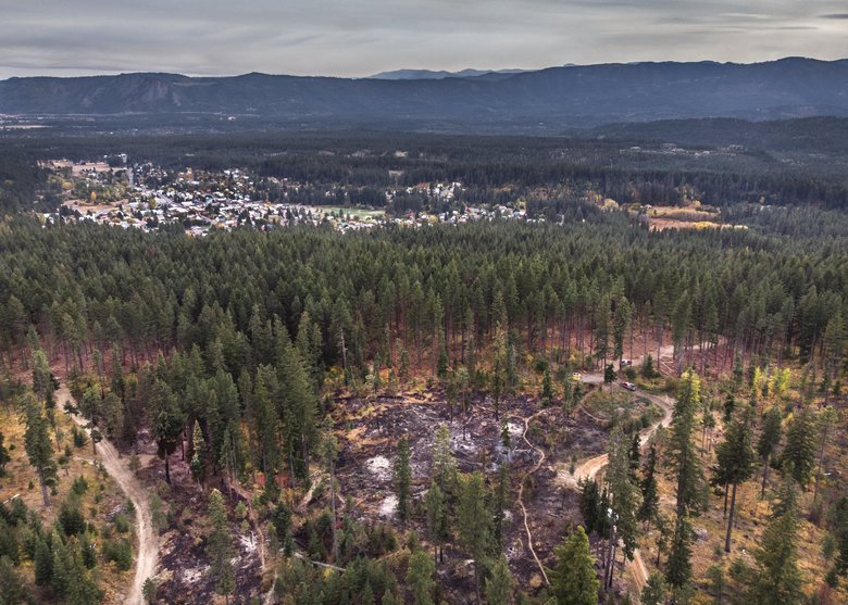 This swath of private forest land near Roslyn underwent a prescribed burn this month. An area to the right had the same treatment last year. (Steve Ringman / The Seattle Times)