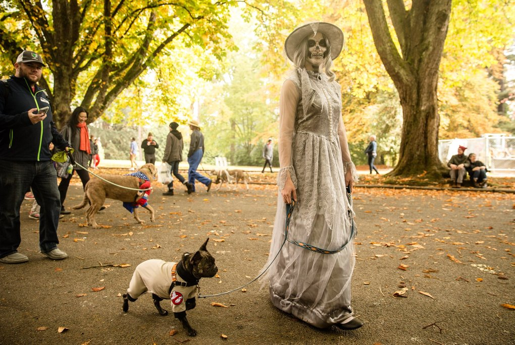 Kandace Shoell walks with her dog, Dill, at the Halloween Pet Parade in Volunteer Park on Sunday. Hundreds of people dressed their pets and gathered in the park for food trucks, vendors and prizes. (Rebekah Welch / The Seattle Times)