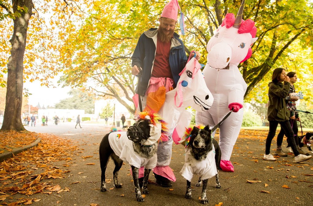 Oreo and Roary match their owners in unicorn costumes in Volunteer Park on Sunday for the Halloween Pet Parade.  (Rebekah Welch / The Seattle Times)