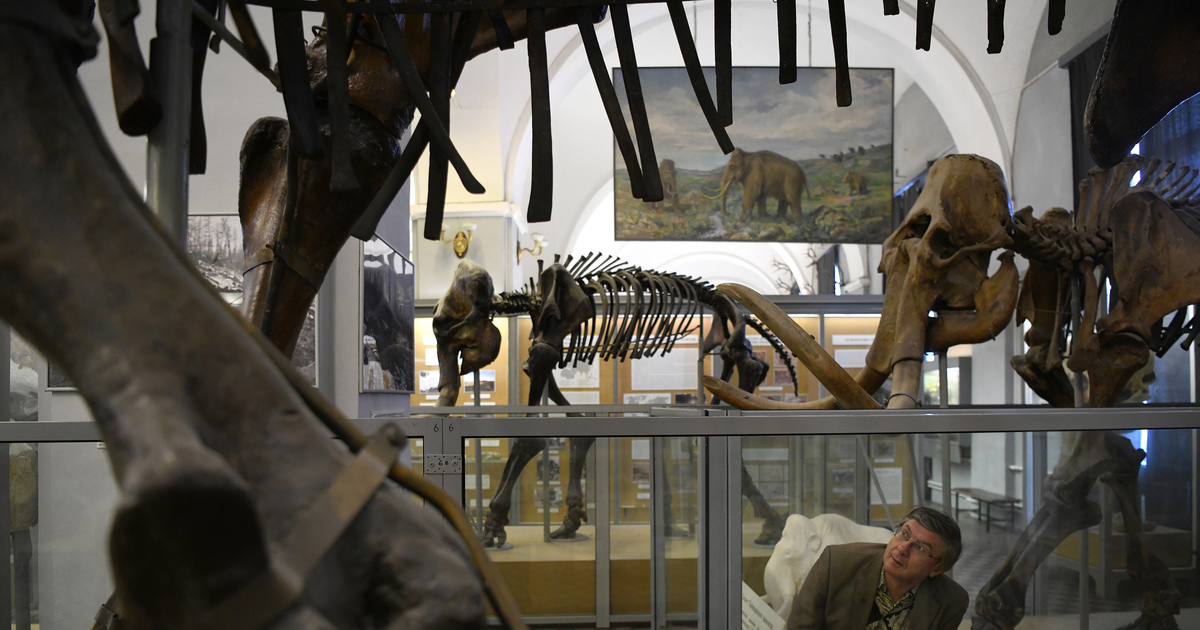 A museum showing its age, and sharing its DNA