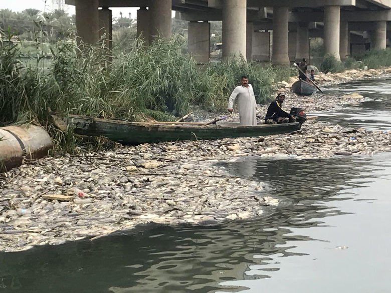 In this Saturday, Nov. 3, 2018 photo, dead carp float in the Euphrates River, near the town of Hindiyah, 80 kilometers (50 miles) south of Baghdad, Iraq. Officials and fishermen are at a loss to explain how hundreds of tons of carp have suddenly died in fish farms in the Euphrates River, fueling anxieties about soaring water pollution. Local authorities used excavators to skim dead fish from the river surface, where residents and local farmers have long complained about substandard water management. (AP Photo/Ali Abdul Hassan)