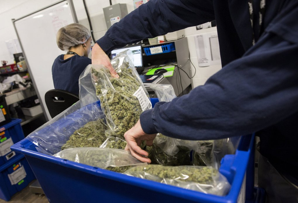 An employee sorts bags of marijuana for shipment at the Canopy Growth facility in Smith Falls, Ontario, Canada. (Chris Roussakis / Bloomberg)