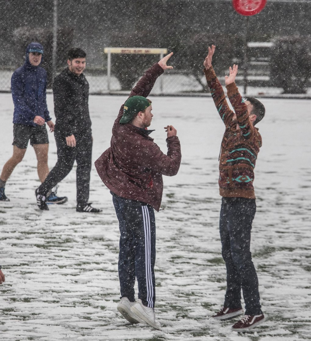 Students at Seattle Pacific University play a game of Ultimate as the snow starts to stick Friday. (Steve Ringman / The Seattle Times)