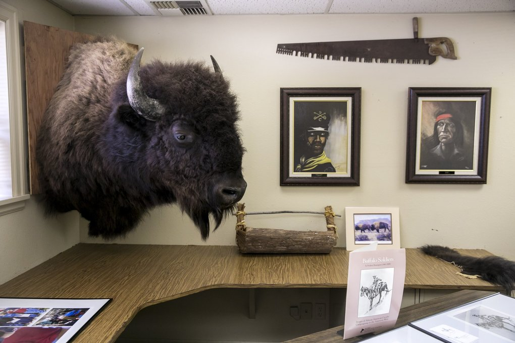 A buffalo and portraits hang on the wall of the Buffalo Soldiers Museum in Tacoma. (Bettina Hansen / The Seattle Times)