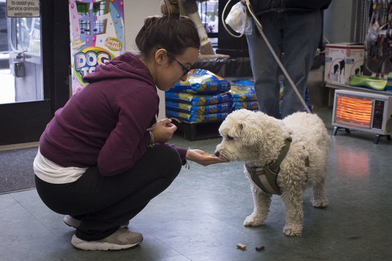 A woman offers a treat to a dog at the Petland store in Brooklyn, N.Y., earlier this year. (Dave Sanders / The New York Times, file)