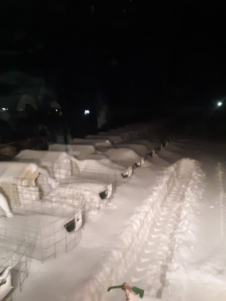 In the early hours of Feb. 9 as the blizzard hit J & K Dairy outside Sunnyside. (Courtesy of Jason Sheehan)
