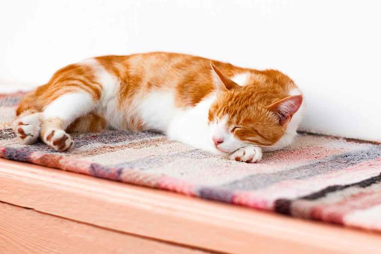 An easy-to-clean rug made of a durable material is a good choice if it will be a place where pets nap. (Getty Images)