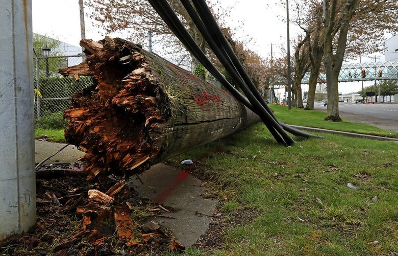 On Thursday, April 11, 2019, shown here along E Marginal Way, S, across from the Museum of Flight, near S 94th Place, is one of the downed power polls, splintered wood, broken off at the base. 209897 209897