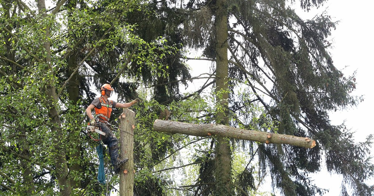 Trees start coming down to make way for light rail's Lynnwood Link