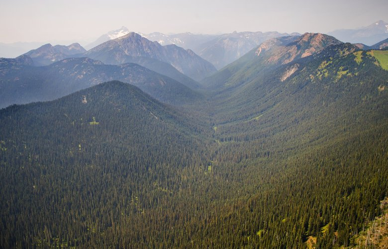 Forest land that drains into the upper headwaters of the Skagit River, which is home to all five species of salmon native to the Pacific Northwest. (Mike Siegel / The Seattle Times)