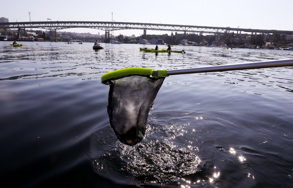 Paul Fredrickson with Puget Soundkeeper wields a fishing net to retrieve debris from Lake Union the day after the fireworks display off Seattle's Gas Works Park. (Alan Berner / The Seattle Times, 2018)