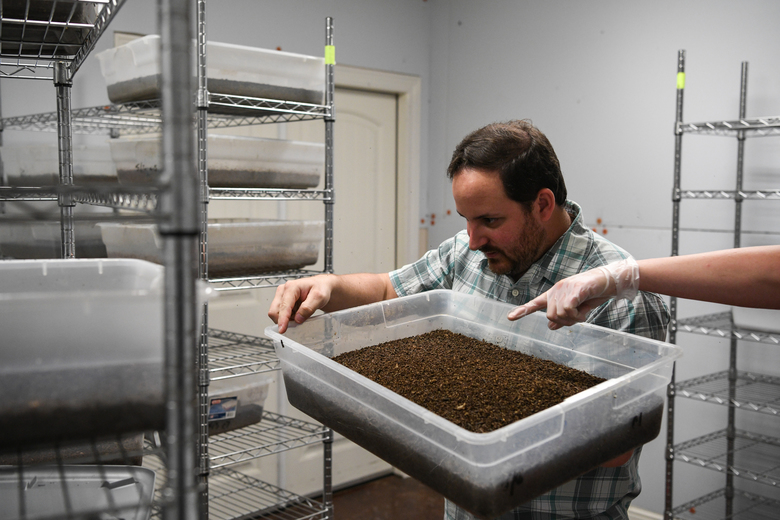 Chief operating officer Jonathan Cammack and site manager Amy Dickerson inspect black soldier fly larvae in a rearing room at the EVO Conversion Systems facilities in College Station, Texas. (Photo for The Washington Post by Loren Elliot)