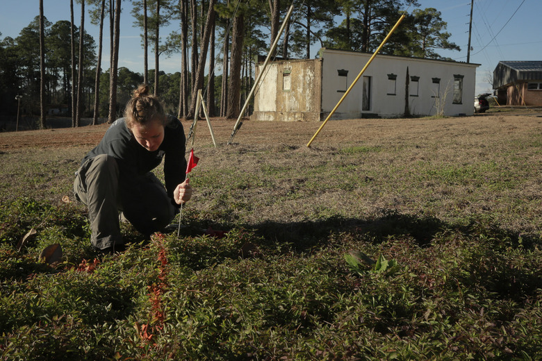 FILE- In this Feb. 4, 2014 file photo, University of South Florida anthropology student Meredith Tise marks a parcel of land to be examined with ground penetrating radar at the Arthur G. Dozier School for Boys, in Marianna, Fla. University of South Florida researchers are returning to a former reform school where they unearthed the remains of 55 people to determine if there are more graves on the site. Forensic anthropologist Dr. Erin Kimmerle will lead the initial two-week project starting Monday to determine if 27 anomalies on the site are likely to be more graves at the Marianna reform school that had a history of abuse. A contractor using ground-penetrating radar discovered the anomalies earlier this year. (Edmund D. Fountain/Tampa Bay Times via AP, File)