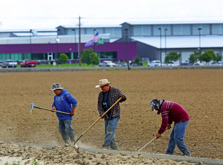 Across the road from the Yahoo server farm in Quincy are Javier Guerrero, left, Luis Blancas, Maria Blancas' father, and Poncho Hernandez, preparing a field of beans to be irrigated. (Mark Harrison / The Seattle Times)