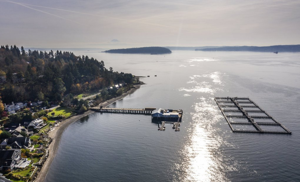 Cooke Aquaculture Pacific seeks to replace nonnative Atlantic salmon with steelhead trout at its net pens in Rich Passage, off Bainbridge Island. The Washington Department of Fish & Wildlife is considering the company's application. The agency is seeking public comment until Nov. 22. (Steve Ringman / The Seattle Times)