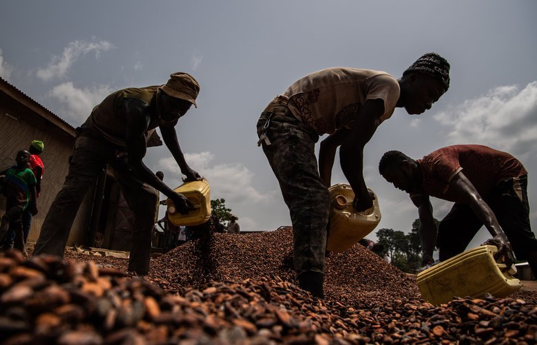 Workers gather dried cocoa beans outside a cooperative facility earlier this year in the Ivory Coast village of Gloplou. MUST CREDIT: Washington Post photo by Salwan Georges.