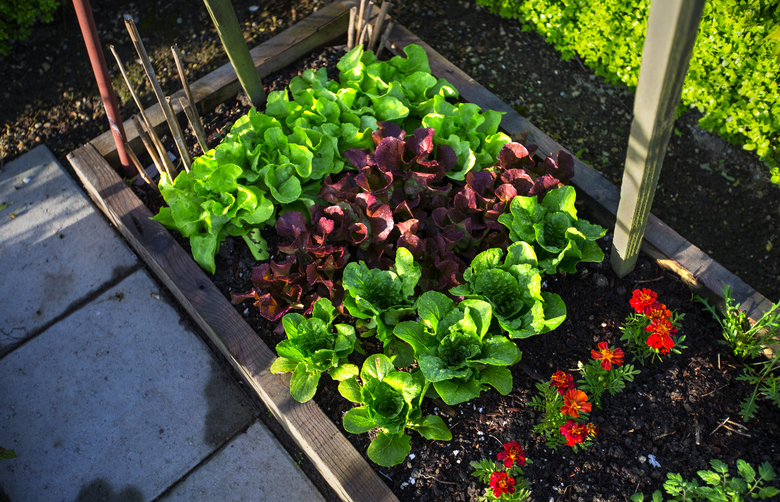 Before You Plant Your Vegetable Garden Read These Tips From An
