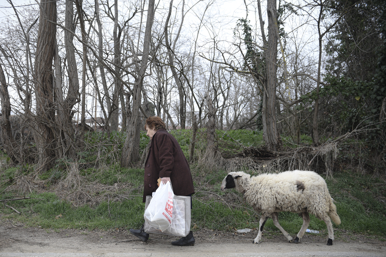An elderly woman walks followed by her sheep in the village of Marasia, Greece, on the Greek-Turkish border Thursday, March 5, 2020. Turkey has vowed to seek justice for a migrant it says was killed on the border with Greece after Greek authorities fired tear gas and stun grenades to push back dozens of people attempting to cross over. Greece had denied that anyone was killed in the clashes. (AP Photo/Giannis Papanikos)