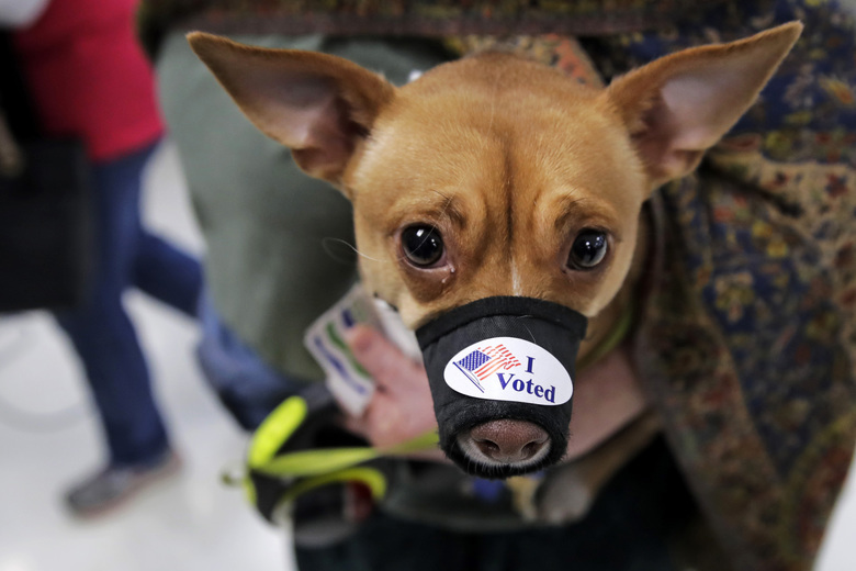 """Nuala sports an """"I Voted"""" sticker while accompanying her owner Jannet Bond to the polls after voting in the Vermont Primary in Burlington, Vt., Tuesday, March 3, 2020. (AP Photo/Charles Krupa)"""