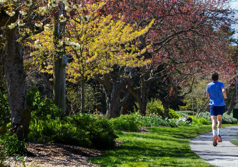 A jogger runs along the path around Green Lake on Monday. Pollen counts are predicted to soar for the rest of this week as temperatures hit the mid-60s and possibly higher in the Puget Sound region. (Ellen M. Banner / The Seattle Times)