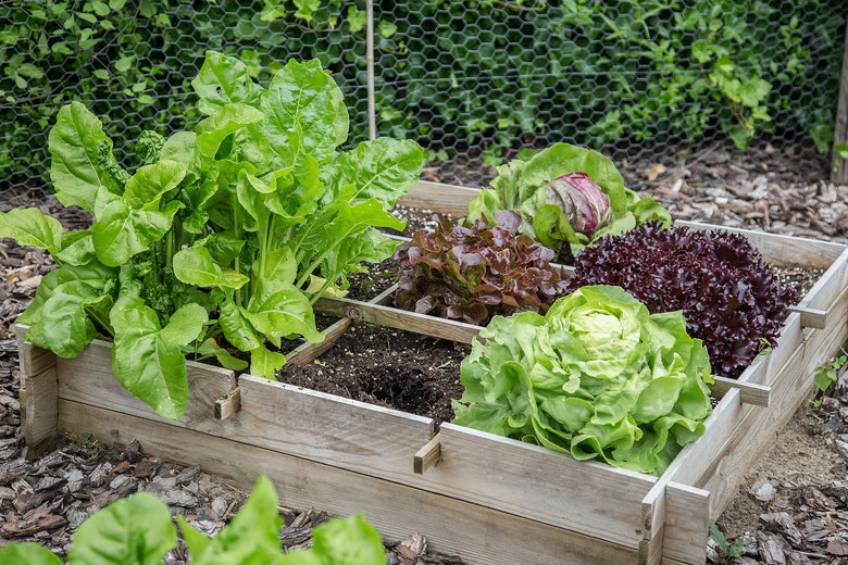 A key way to save money on your garden? Start small. Be realistic about how much time you have to tend to your crops and how much produce you'll actually eat. (Getty Images)