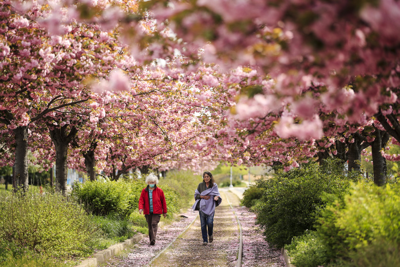 People, one wearing a protective face mask as a precaution against the coronavirus, walk beneath blossoming trees in Philadelphia, Tuesday, April 14, 2020. (AP Photo/Matt Rourke)