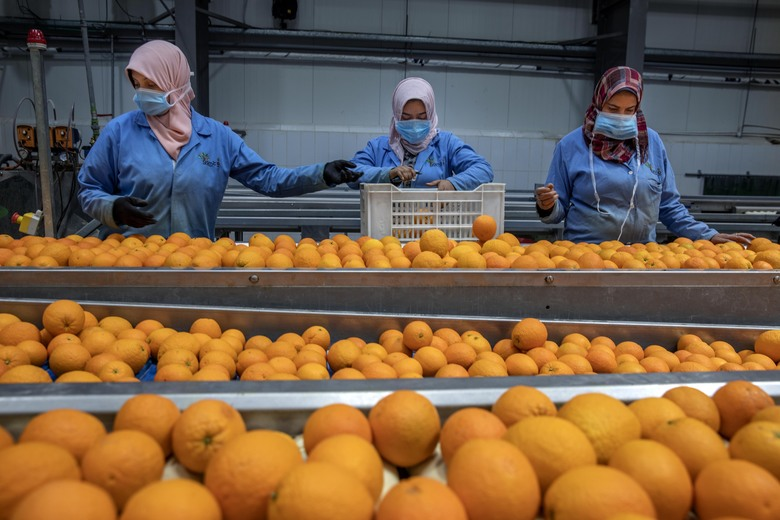 """Workers at Egypt's agriculture and fruit exporting company, Gamco, wear face masks as a preventive measure because of the coronavirus pandemic, as they assemble oranges for export at a factory, in the Mediterranean province of Alexandria, Egypt, Wednesday, April 15, 2020. Egypt has been listed as the world's largest exporter of orange, according to Aswaq financial company. """"Our exporting business to Europe is doing very well these days because people are in need of vitamin C and the demand is higher due to COVID-19,"""" says Gamco general manager Mohammed el-Sherif. (AP Photo/Nariman El-Mofty)"""
