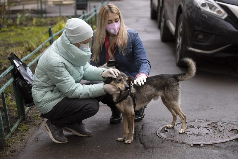"""In this photo taken on Saturday, April 25, 2020, Alexandra Novatova, left, and Anastasia Medvedeva, one of the organizers of the online adoption initiative called """"Happiness Delivered At Home"""", both wearing face masks and gloves to protect from coronavirus, pet Barly, the two year old mutt dog at Novatova's apartment building in Moscow, Russia. Alexandra Novatova opted to use a delivery service a big decision because she was ordering more than a pizza or a shipment of toilet paper. She got a dog brought to her door. With humans spending all day at home, it's an opportune period to find the time to acclimate a new dog and an online project is capitalizing on this to match shelter dogs with people. (AP Photo/Alexander Zemlianichenko)"""