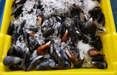 Kuzma's Seafood Market also serves up fresh mussels, clams and oysters. Credit: Providence Cicero