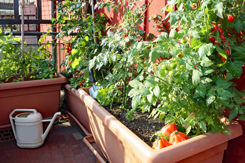Don't let a lack of yard space keep you from gardening this summer. Many vegetables, such as grape tomatoes, grow well in containers. (Getty Images)