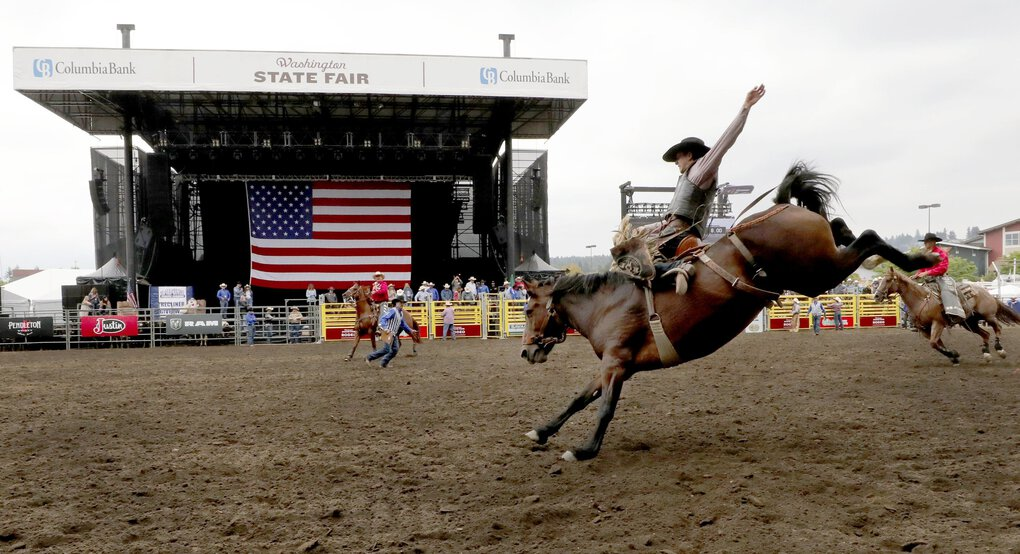 Kolby Wanchuk from Sherwood Park, Alberta, hangs on in the saddle bronc competition at the Pro Rodeo Tour Finale in the 2019 edition of the Washington State Fair. The 2020 fair has been canceled due to coronavirus concerns.   (Alan Berner / Seattle Times)