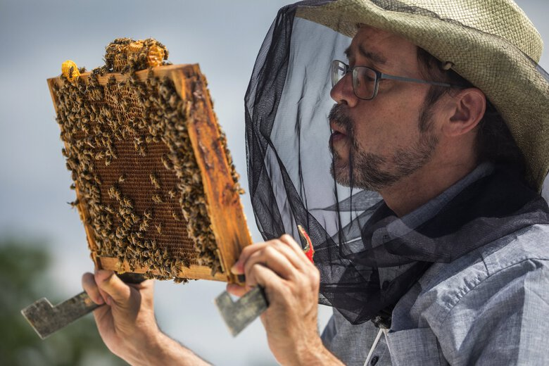 Bob Redmond blows on bees while looking for the queen on a frame. (Steve Ringman / The Seattle Times)