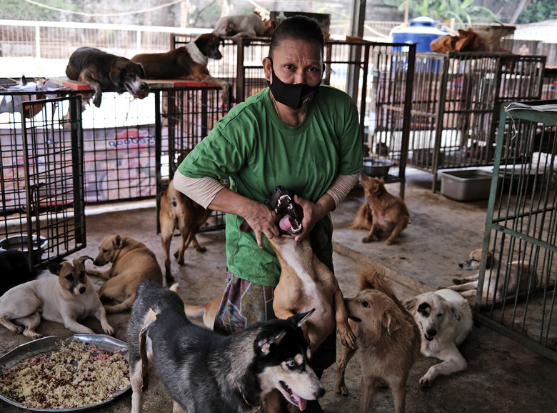 A worker feeds medicine to a dog at Pejaten Shelter in Jakarta, Indonesia, Thursday, July 2, 2020. Located in 5,000 square meters of land in South Jakarta, Pejaten Shelter is a place for more than 1,400 dogs, most of them are street dogs, while larger breeds such as pitbulls and rottweilers are kept in cages. (AP Photo/Dita Alangkara)