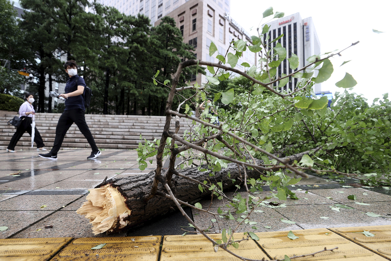A fallen tree caused by strong winds lies across a sidewalk in downtown Seoul, South Korea, Thursday, Sept. 3, 2020. A powerful typhoon ripped through South Korea's southern and eastern coasts with tree-snapping winds and flooding rains Thursday, knocking out power to thousands of homes. (Ryu Young-suk/Yonhap via AP)