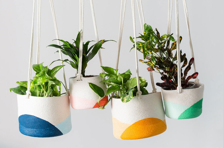 Ten plant varieties that will do well in baskets and macrame hangers. (Courtesy of Closed Mondays)