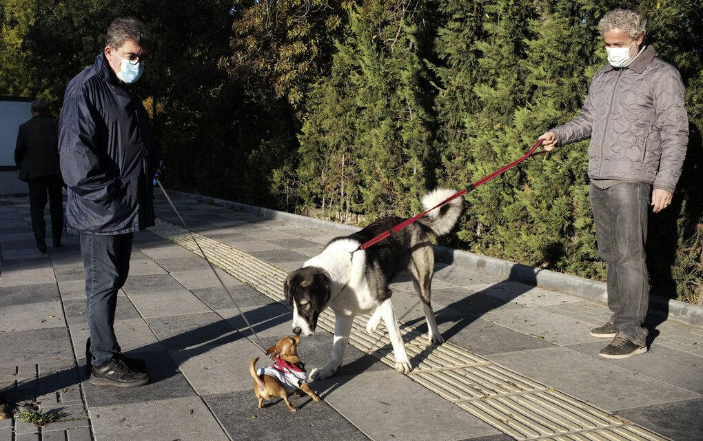 Two men wearing masks watch their dogs playing in a public garden in Ankara, Turkey, early Thursday. Turkey's interior ministry has banned smoking in public places  to curb the spread of COVID-19. (Burhan Ozbilici / The Associated Press)