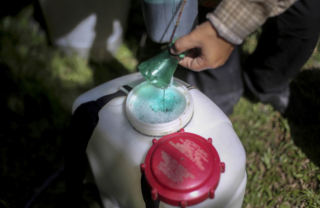 A woman fills a spray tank with pesticide to control weeds at a palm oil plantation in Sumatra, Indonesia, Saturday, Sept. 8, 2018. A group of women interviewed by The Associated Press wondered whether their arduous jobs, combined with the chemicals they handle and breathe, caused their infertility, miscarriages and stillbirths. (AP Photo/Binsar Bakkara)