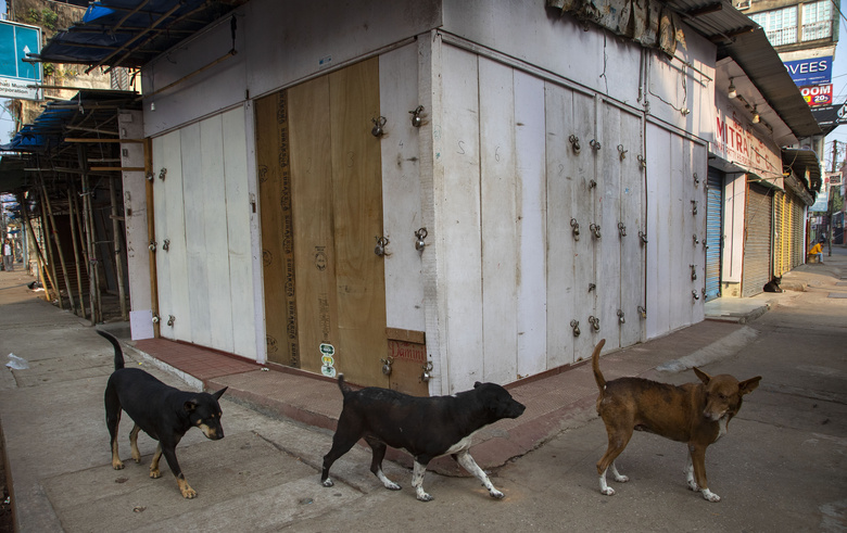 Stray dogs walk past closed shops at a deserted market during a nationwide shutdown called by thousands of Indian farmers protesting new agriculture laws in Gauhati, in the northeastern state of Assam, India, Tuesday, Dec. 8, 2020. The strike follows five rounds of talks between the farmers and the Indian government that have failed to produce any breakthroughs. The farmers say the laws will lead the government to stop buying grain at minimum guaranteed prices and result in exploitation by corporations that will push down prices. (AP Photo/Anupam Nath)