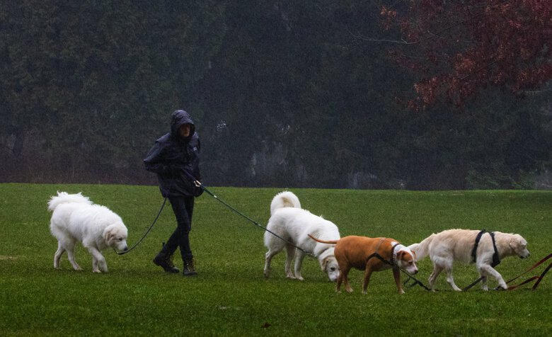 This man didn't let the rain damper a walk with the his dogs at Volunteer Park earlier this month. (Ellen M. Banner / The Seattle Times)