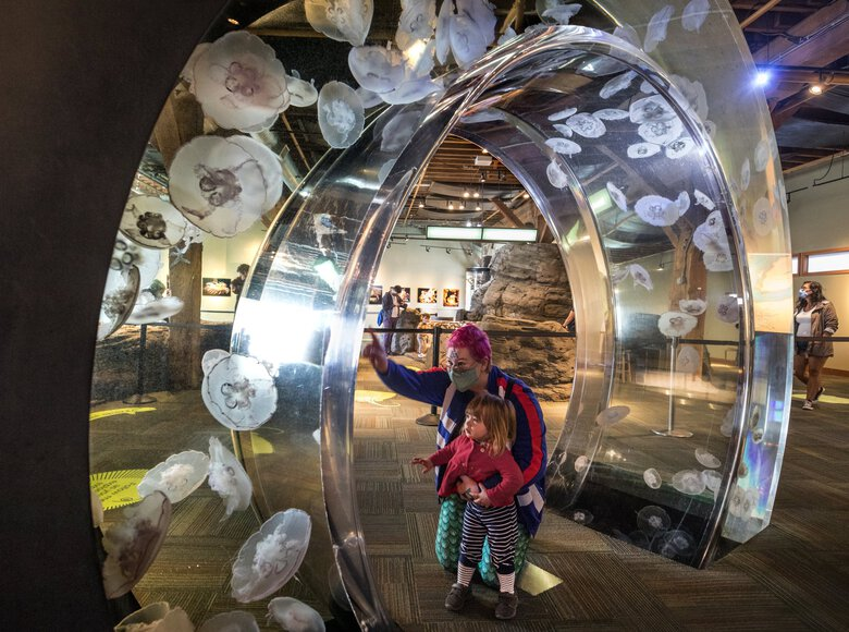 Aquarium visitors check out the Moon Jelly circle near the tide pools during the first day the Seattle Aquarium reopened to the public the first time in June 2020. After closing for 29 days at the beginning of the year, Seattle Aquarium reopened again on Feb. 9. (Steve Ringman / The Seattle Times)