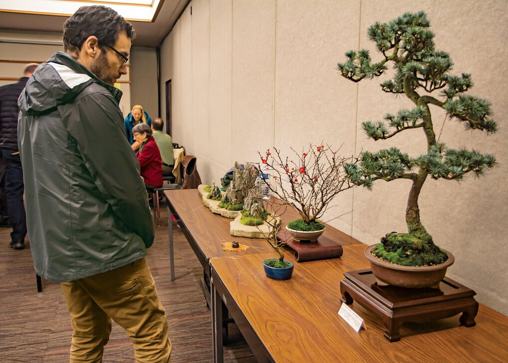 Prepandemic, Colin Tracy took a close look at fellow members' bonsai during a Puget Sound Bonsai Association meeting break. Since a Gather story on the group ran, in April 2020, meetings are still held monthly, but the group, and its annual show, have moved online. (Christy Karras, 2020)
