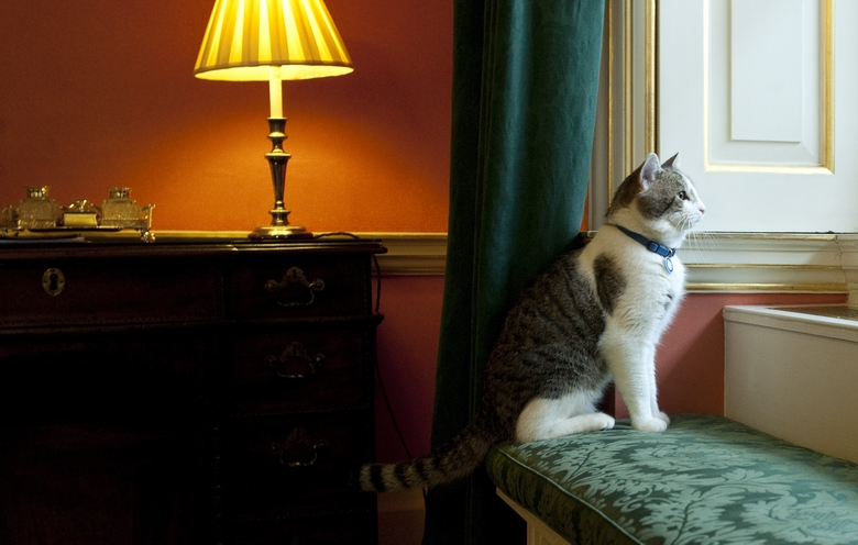 FILE – In this Tuesday Feb. 15, 2011 file photo, Larry, Downing Street's new official rat catcher, looks out of a window in the Prime Minister's residence in London, shortly after his arrival.  Monday, Feb. 15, 2021 marks the 10th anniversary of rescue cat Larry becoming Chief Mouser to the Cabinet Office in a bid to deal with a rat problem at 10 Downing Street. (Mark Large/Pool photo via AP, file)